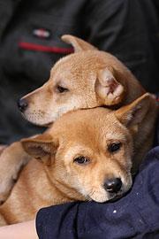大切な犬と楽しく暮らすために 2 犬との接し方
