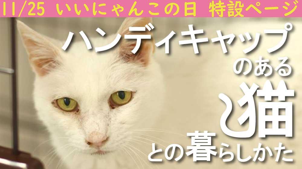 猫 千葉 保護