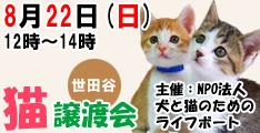 8月22日日曜日に世田谷で猫の譲渡会開催