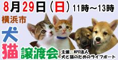 8月29日日曜日に横浜市で犬と猫の譲渡会開催