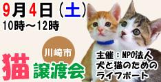 9月4日土曜日に川崎市で猫の譲渡会開催