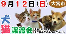 9月12日日曜日に大宮市で犬と猫の譲渡会開催