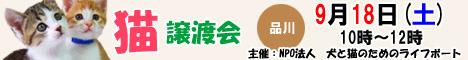 9月18日土曜日に品川区で猫の譲渡会開催